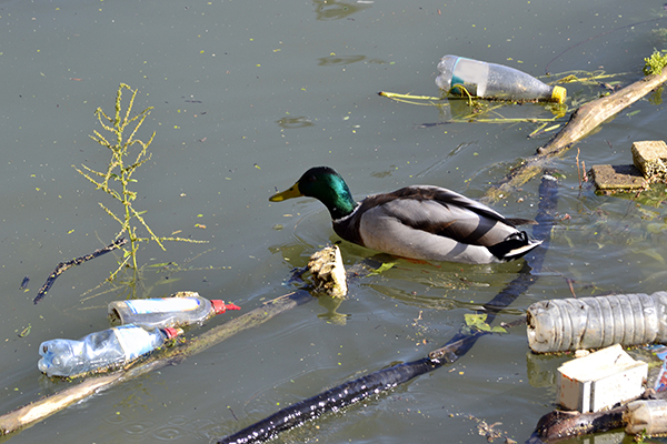 Tennessee Wildlife Federation wants your litter (photos)