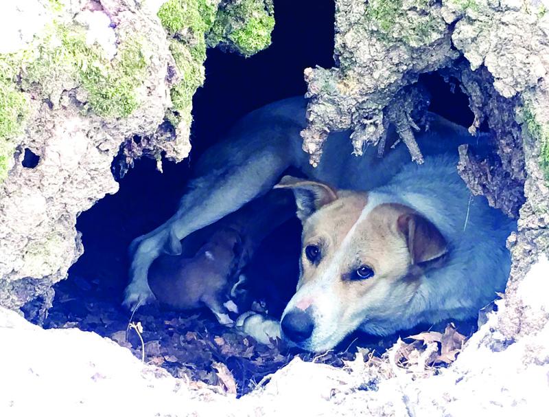 CCCA rescues Goldie & pups | CCCA, Goldie, puppy