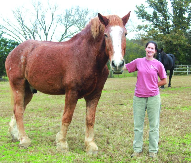 Come and meet the horses | Horses, Ferrell Creek Farms