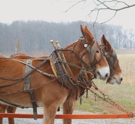 Mule Skinners show May 11 | Mule Skinners