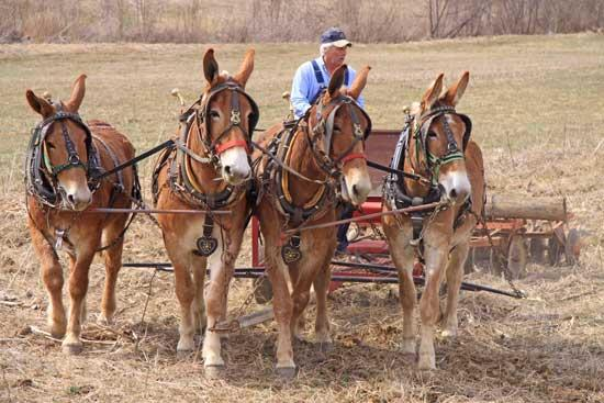 From Machinery To Mules