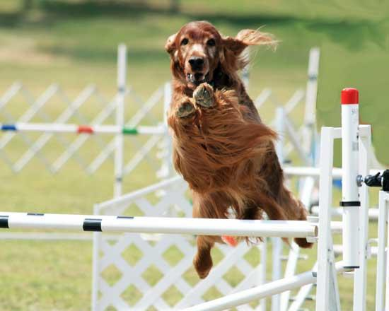Canine Agility Trial In Murfreesboro This Weekend