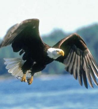 VINSON: Mysteries Of Eagle Are Amazing