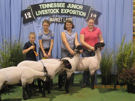 Local 4-Hers Compete In Sheep Expo