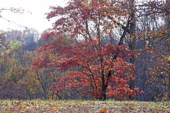 Colorful Fall Foliage In Cannon County