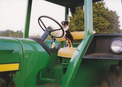 READ: Trusted dog a farm must | Pettus Read, farm dog