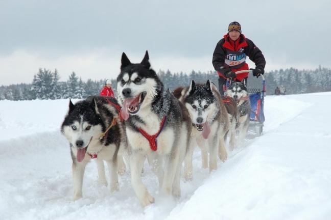 Dr. Tate to participate in Iditarod