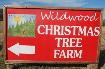 O Christmas trees!