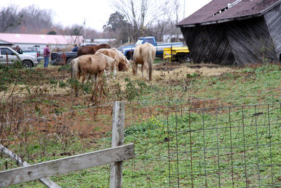 Horse Starvation Bill Faces Hurdles In House