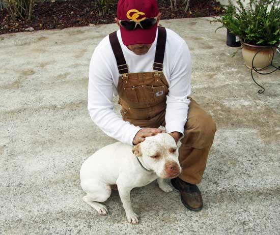Pit Bull Owner Disputes Neighbor's 'Vicious' Tale