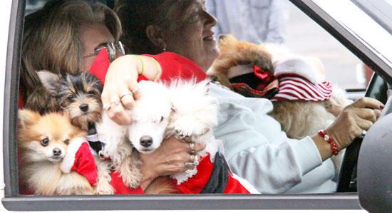 PHOTO GALLERY: 2010 Woodbury Christmas Parade
