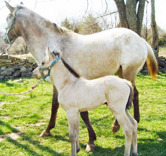 Genetic Purity: Zeva Born At Foggy Valley Farms