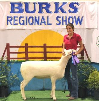 Currie Competes In Regional Sheep Show