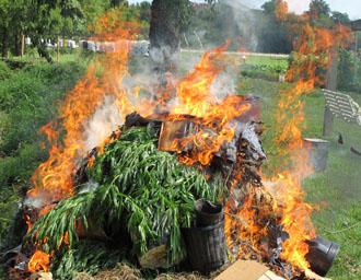 Large Pot Growing Operation Goes Up In Smoke