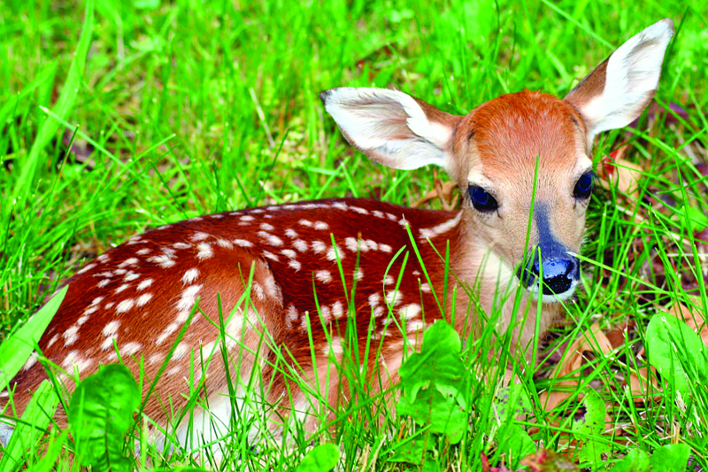 Spot a fawn? Leave it alone!