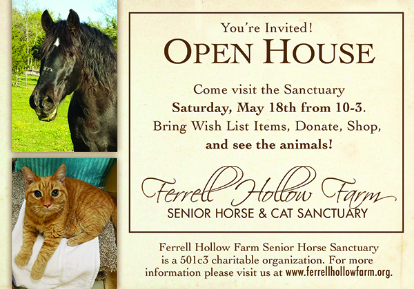Spring Festival at Senior Horse & Cat Sanctuary