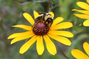 Tennessee Observes National Pollinators Week