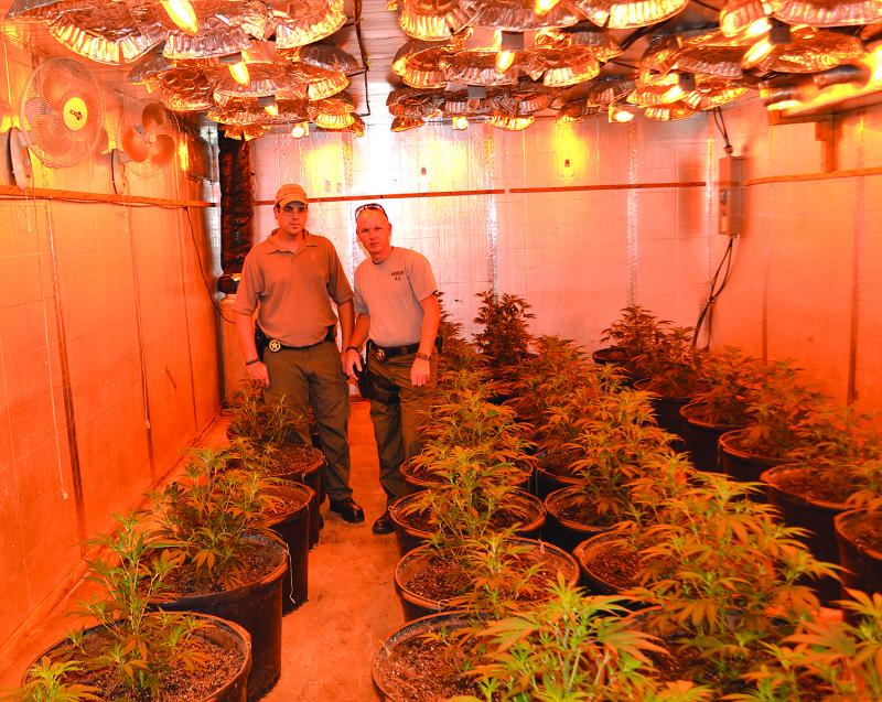 Major indoor pot grow busted
