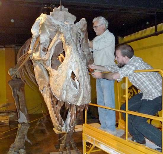 Tennessee's T-Rex Ready For Visitors At Highlands Prehistoric Museum