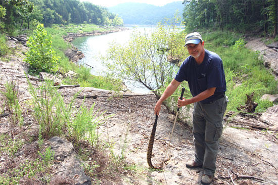 Snake Man On Quest To Rescue The Timber Rattler