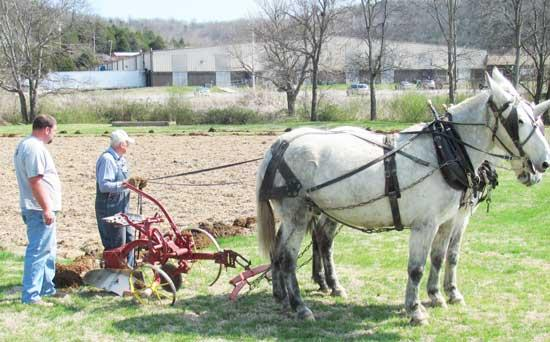 Mule Skinners Plow Field For Sheriff's Garden
