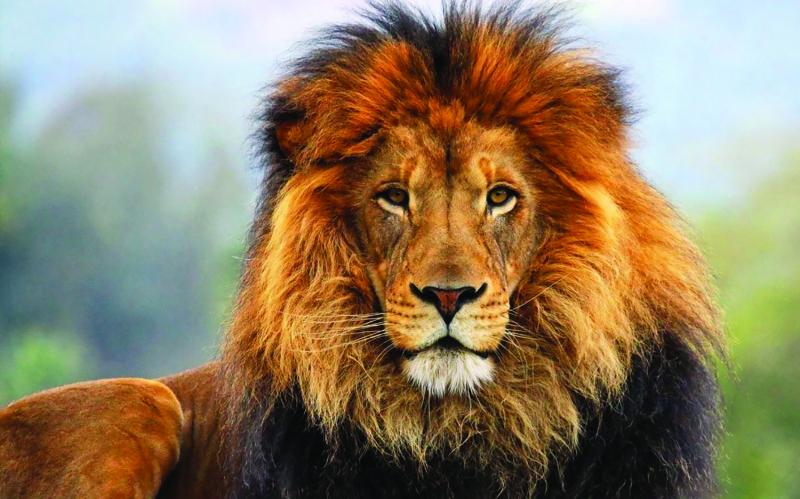 Lions baseball team looking for a successful season